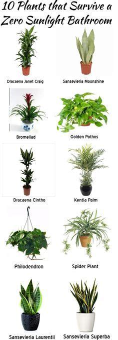 Indoor Flowering Plants No Sunlight 1000 Ideas About Indoor Plant Decor On Pinterest Plant
