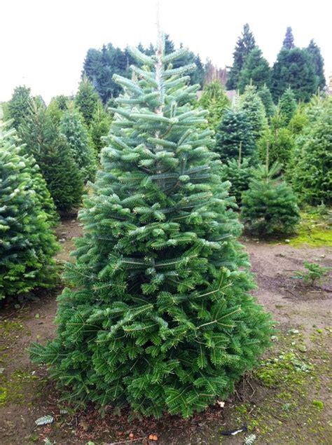 Amazing Christmas Tree Farm Prices #4: 7505894_orig.jpg