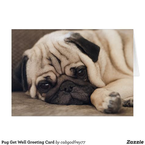 get well pug pug get well greeting card zazzle