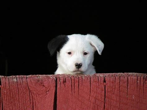 hanging tree puppies 14 best images about hangin tree dogs on name suggestions montana and trucks