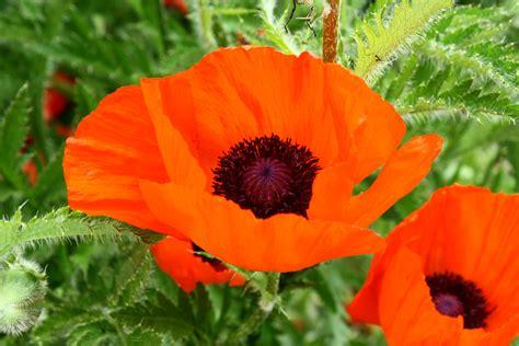 poppy images femalecelebrity
