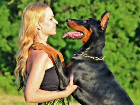 i want to service dogs judging a service candidate including your own pet canine habit