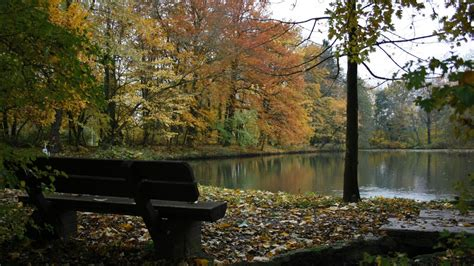 stream bench download wallpaper 1920x1080 bench lake autumn wood