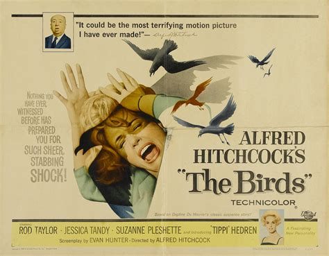 the birds remake lands director diederik van rooijen