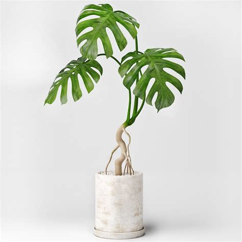 Plant Home Decor by Monstera 3d Model Max Fbx Cgtrader Com