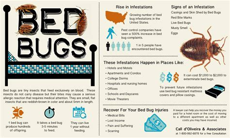 information about bed bugs syp bug question the radioreference com forums
