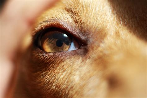 dogs vision file eye of a jpg