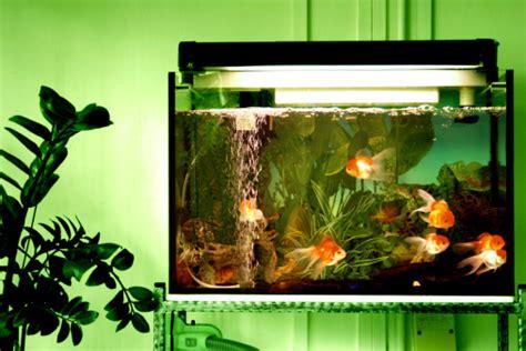 Jual Termometer Akuarium akuarium cantik sebagai pemanis ruangan