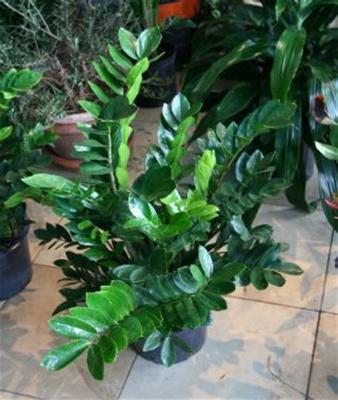 plants that do well in low light fair oaks boulevard nursery houseplants