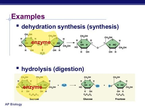 hydration vs dehydration reaction enzymes