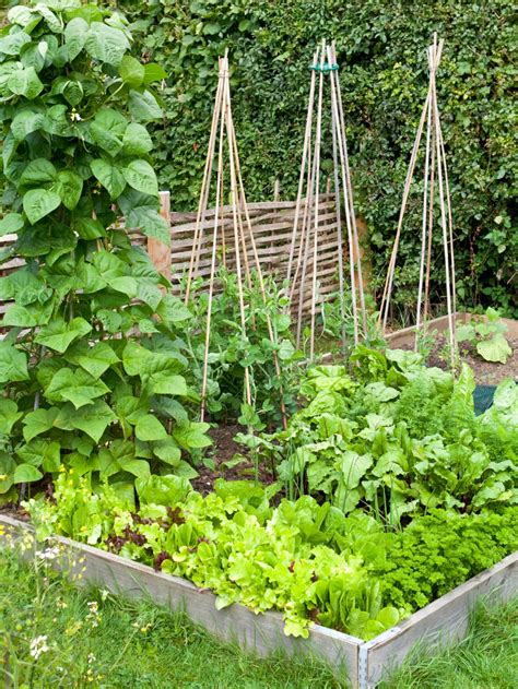 growing vegetables in backyard how to build a raised vegetable bed hgtv