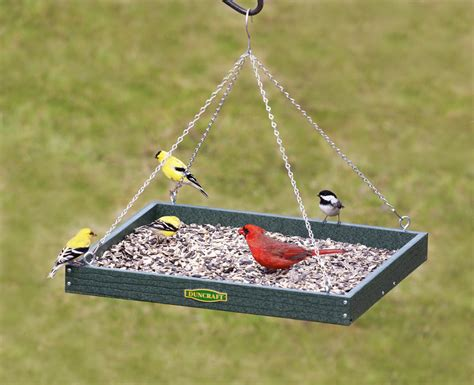 attract more birds with platform feeders
