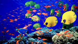 what color is coral reef animals fishes underwater swim coral reef colors bright