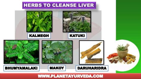 Herbal Ways To Detox Liver by Amazing Herbs To Cleanse Your Liver Naturally