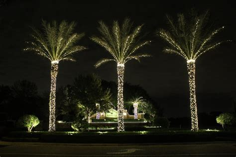 how to decorate a palm tree with lights lights house providing lighting