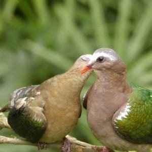 mexicanlove bird infertilidad problema de dos m 233 xico f 233 rtil