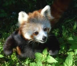 25 adorable baby animal pictures 25 pics amazing creatures