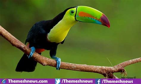 top 10 most beautiful birds in the world 2017