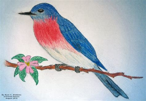 draw and color bird color pencil and in color bird color