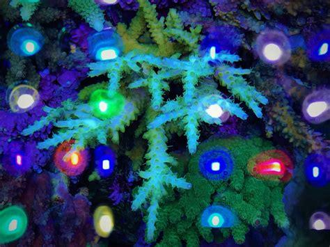best light spectrum for coral growth aquarium led lighting orphek