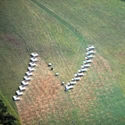 Diy Rabbit Hutch Plans Environmental Interests Polyface Farm