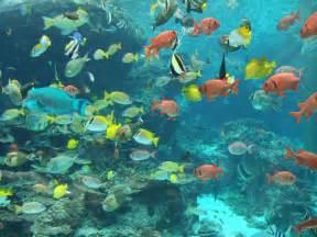 Fish S File Fish In Okinawa Churaumi Aquarium Jpg