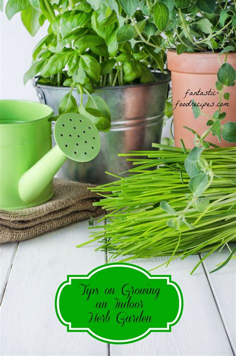 growing an herb garden indoors indoor herb garden archives fantastic food recipes