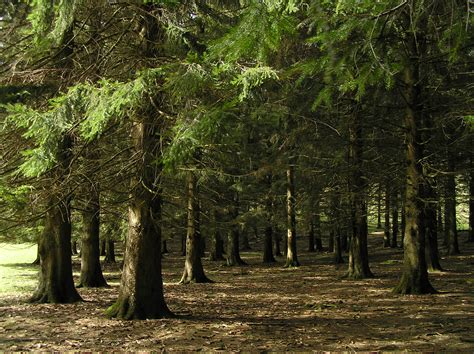 el bosque image gallery el bosque
