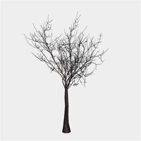 free tree model free tree branch 3d model