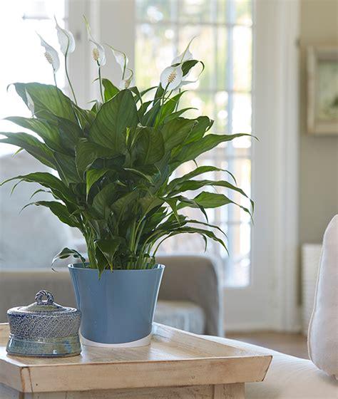 popular houseplants costa farms