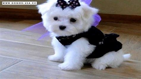 cutest puppy dogs   cute dog  collection youtube