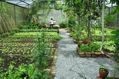 organic vegetable gardens organic vegetable garden source of veggies served