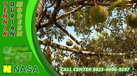 gambar durian  togel hd terbaik infobaru