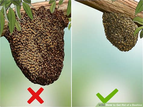 how to get rid of a beehive in your backyard easy ways to get rid of a beehive wikihow