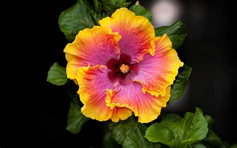 images of beautiful flowers beautiful flower images collection for free