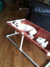 Bunk Beds Ashley Furniture Pvc Dog Bed Diy Pet Products Pinterest