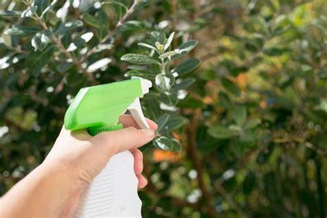 an all bug spray for a vegetable garden home