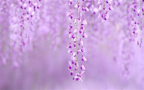 Flower Images For Wallpaper - spring flower wallpaper backgrounds wallpapersafari