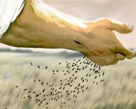 tribework sowing seeds of love in faith