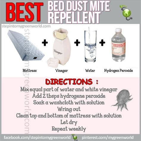 how to get rid of dust mites in bed 17 best images about cleaning on pinterest chore jar