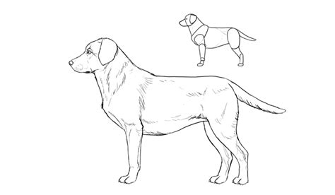 how to labrador in how to draw a details make the difference