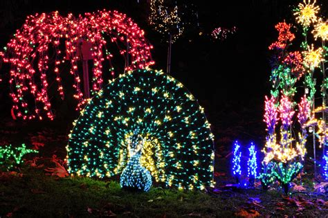 the dazzling light displays of bellevue botanical garden d