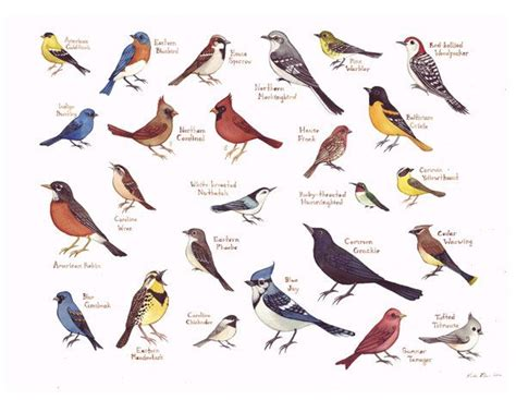 eastern north carolina birds field guide style watercolor