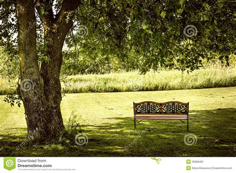 bench under tree park bench under tree stock image image of greenery