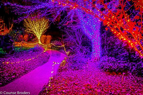 atlanta botanical garden lights atlanta