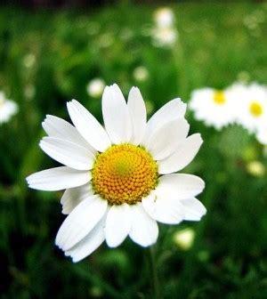 immagine dei fiori fai da te 5 minuti per l ambiente