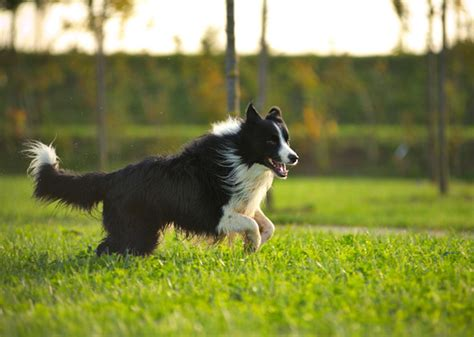 dogs that live the 7 of the best breeds for living in the country