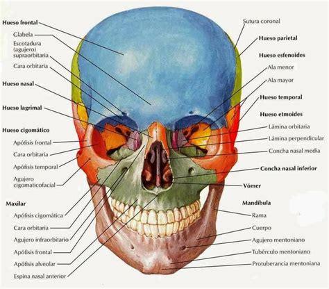 el cr 193 neo humano anatom 237 a artistas cara pinterest