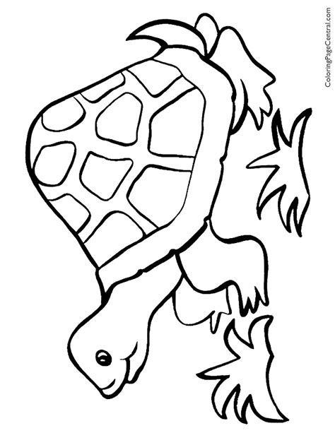 tortoise color tortoise coloring pages