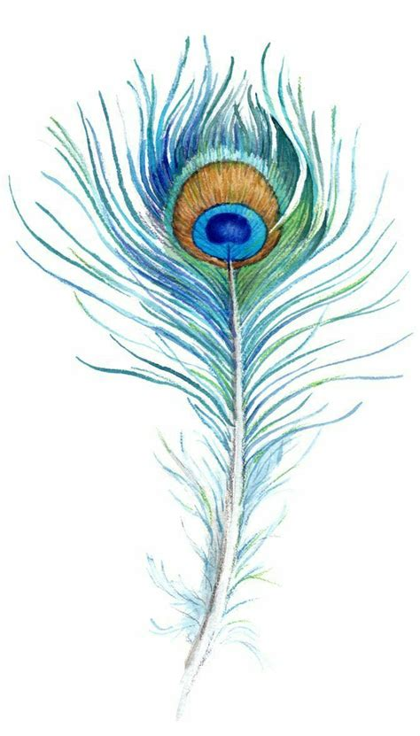 peacock feathers tattoo designs 1000 ideas about peacock
